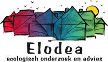 Elodea